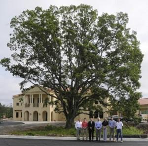 large_tree_jpeg